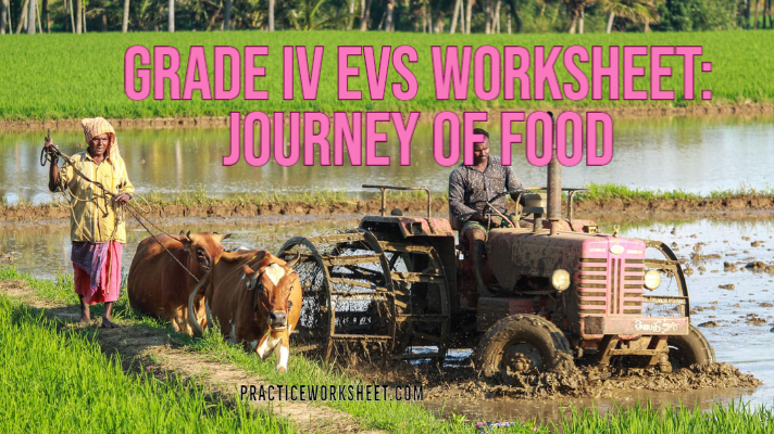 Grade IV EVS Worksheet Journey of Food